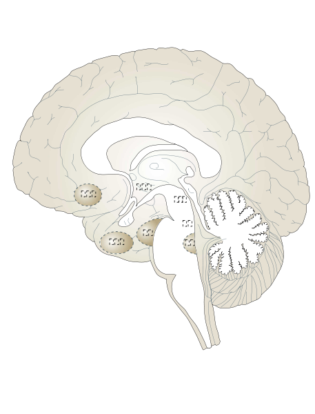 White Brain Clipart png free, White Brain transparent png