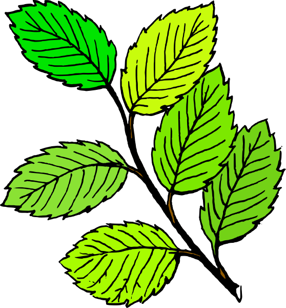 Summer Leaves Clipart png free, Summer Leaves transparent png