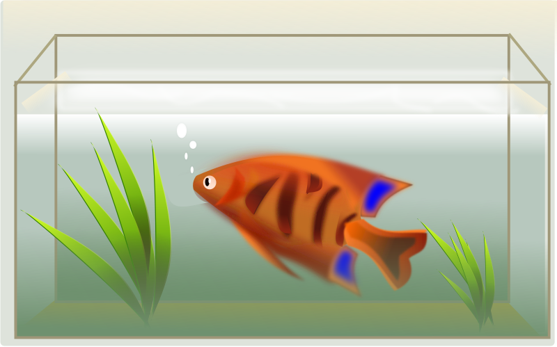 Fish Clipart png free, Fish transparent png