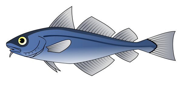 Cod Fish Clipart png free, Cod Fish transparent png