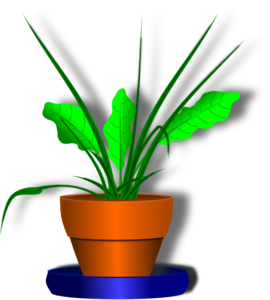 Flower Pot With Green Plant Clipart png free, Flower Pot With Green Plant transparent png
