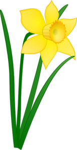 Single Daffodil Clipart png free, Single Daffodil transparent png
