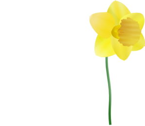 Single Plucked Daffodil Clipart png free, Single Plucked Daffodil transparent png
