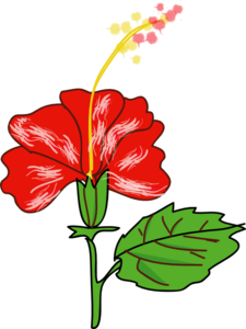 Red Hibiscus With Leaf Clipart png free, Red Hibiscus With Leaf transparent png