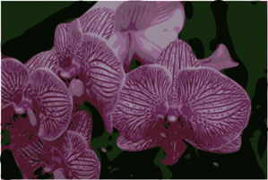 Bunch Of Orchids Clipart png free, Bunch Of Orchids transparent png