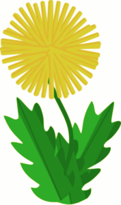 Cartoon Dandelion Clipart png free, Cartoon Dandelion transparent png