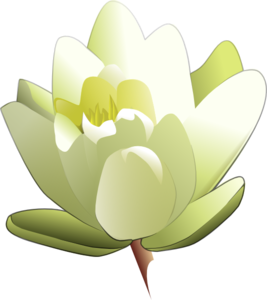 White Water Lily Clipart png free, White Water Lily transparent png