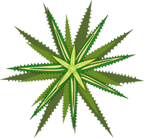 Bromelia Flower Clipart png free, Bromelia Flower transparent png