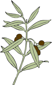 Olive Branch Clipart png free, Olive Branch transparent png
