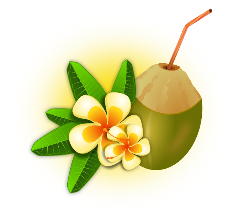 Coconut Clipart png free, Coconut transparent png