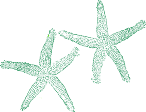 Green Starfish Clipart png free, Green Starfish transparent png