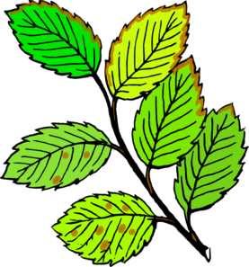 Leaves Brown Edges And Spots Clipart png free, Leaves Brown Edges And Spots transparent png