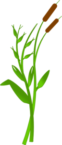 Cattails Clipart png free, Cattails transparent png