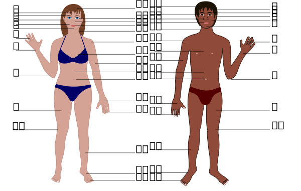 Human Body Both Genders With Numbers Clipart png free, Human Body Both Genders With Numbers transparent png