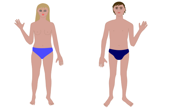 Human Body, Man And Woman Clipart png free, Human Body, Man And Woman transparent png