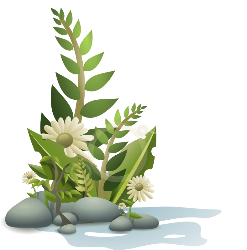 Plants Pebbles And Flowers Clipart png free, Plants Pebbles And Flowers transparent png