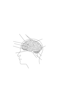 Human Brain Clipart png free, Human Brain transparent png