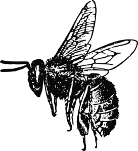 Bee Clipart png free, Bee transparent png