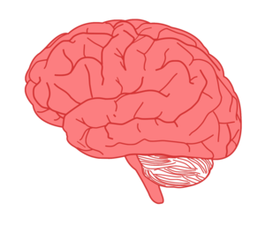 Brain In Profile Clipart png free, Brain In Profile transparent png