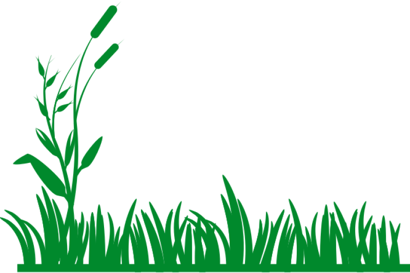 Grass Background Clipart png free, Grass Background transparent png