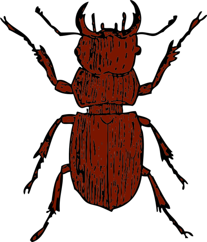 Stag Beetle Clipart png free, Stag Beetle transparent png