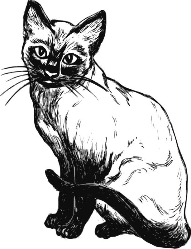 Siamese Cat Clipart png free, Siamese Cat transparent png