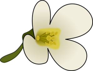 Thaliana Flower Clipart png free, Thaliana Flower transparent png