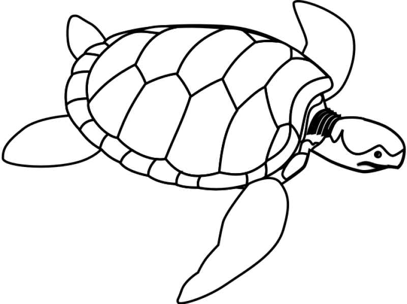 Green Sea Turtle Line Art Clipart png free, Green Sea Turtle Line Art transparent png